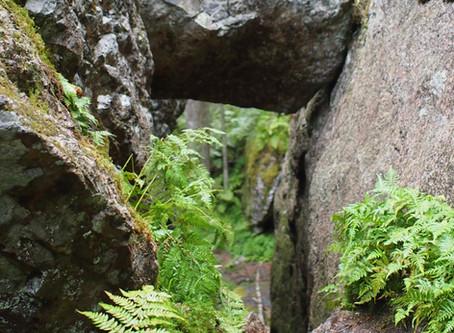 Jos metsään haluat mennä nyt - kolme retkikohdetta Jyväskylän lähiluonnossa