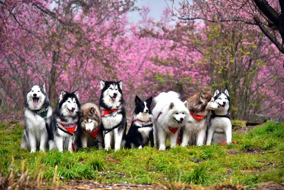 小犬故事-帶著毛小孩一起去旅行