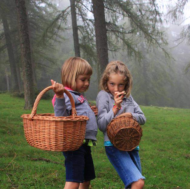 Nei boschi a cercar funghi