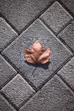 floorcleaning-lfn-clean1.jpg