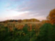 Beautiful vue near Polesdon