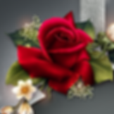 Velvet Rose_Minis_Collection_Thumb.png