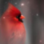 Winter Cardinal_Minis_Image_Medium_1.png