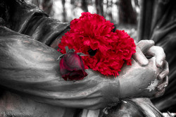 flowers for the soul