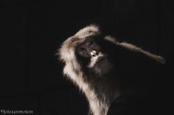 far off monkey_