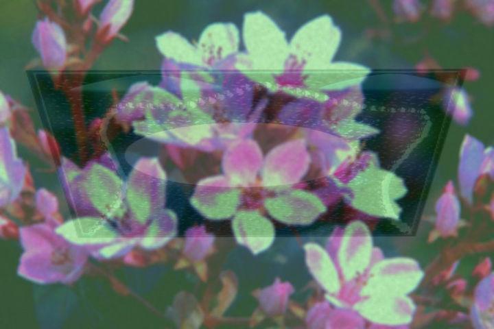 Pink Almond Tree Flowers _edited_edited.