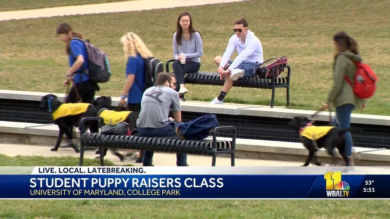 WBAL-TV Covers our University of Maryland Puppy Raising Program