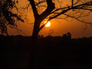 Eye of the Tiger - Jim Corbett National Park, Uttrakhand, India