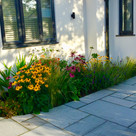 Planting design - WIMBLEDON - SW19 - 2020