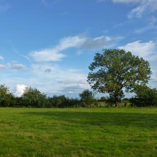 Field View 1.JPG