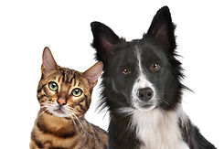 close-up-portrait-of-dog-and-cat-UKCT5H8