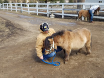 Meeting our rescue Ponies