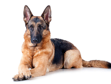 Symbols: German Shepherd