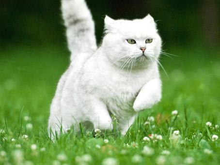 Symbols: Cats (Domesticated)