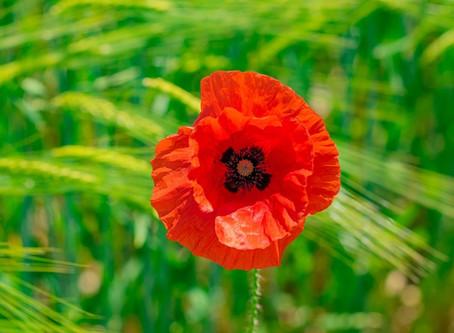 Dream Symbols: Red Flower