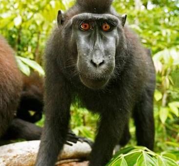 Symbols: Monkey