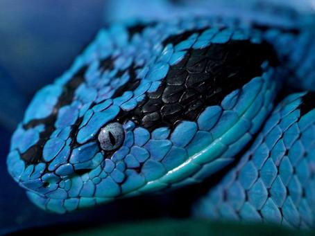Symbols: Snake