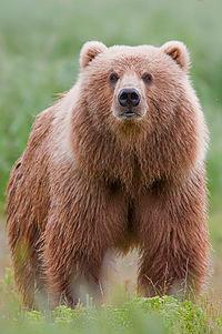 Symbols:  Bear