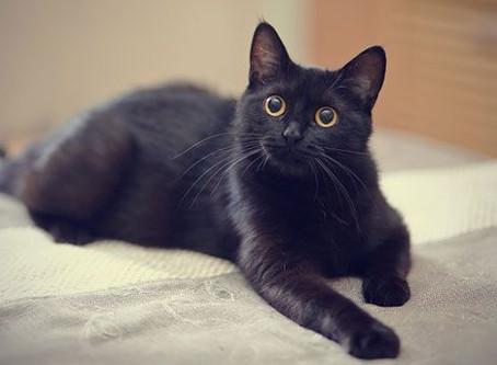 Dream Symbols: Black Cat
