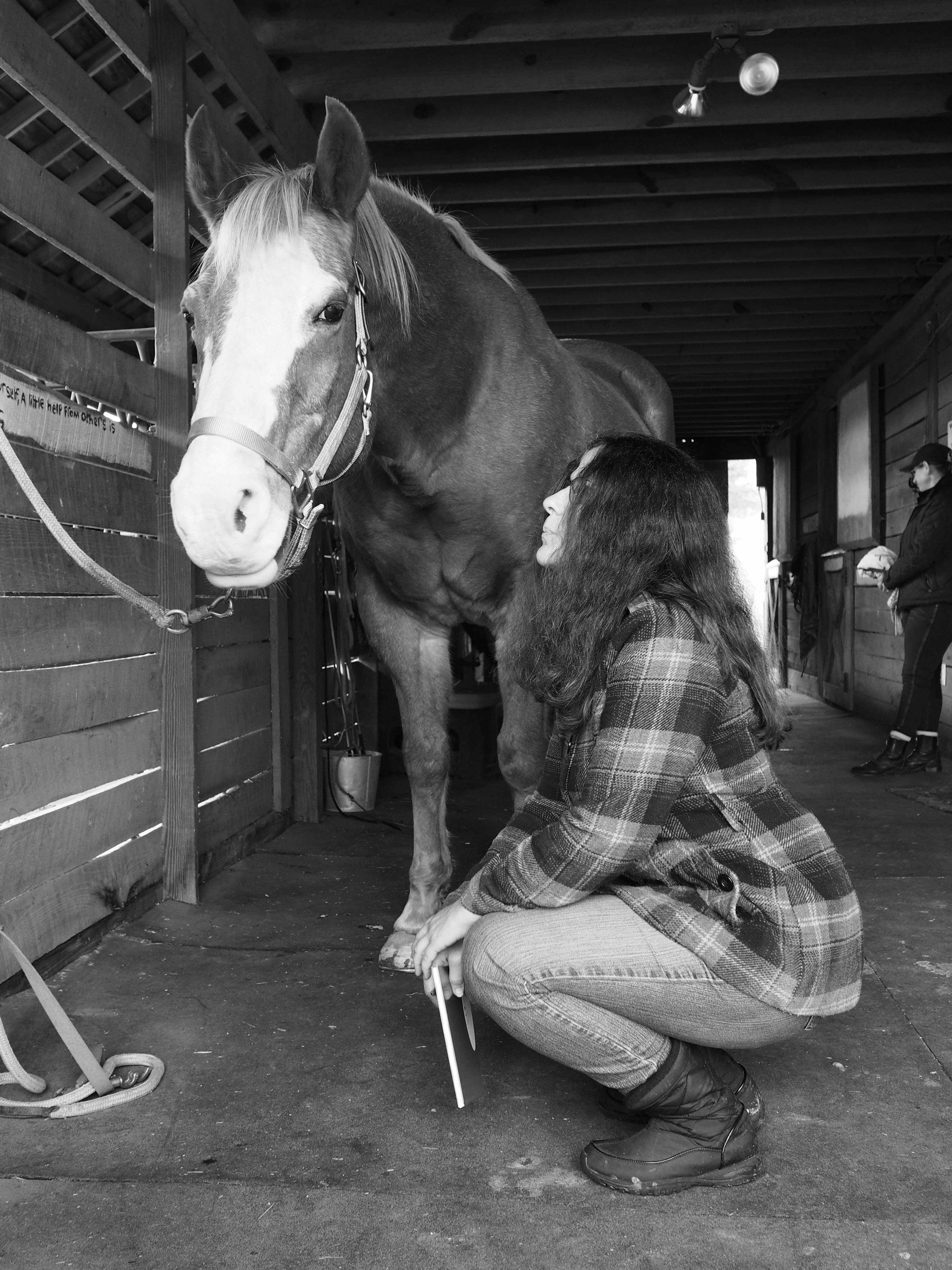 Family Days with Horses