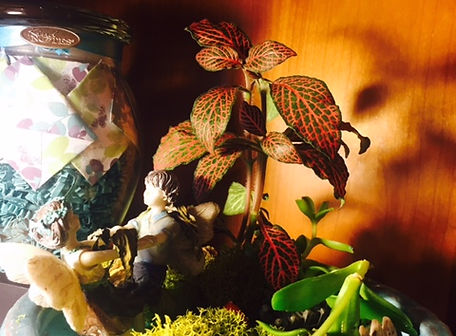 succulent fairy gardens.jpg