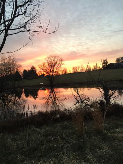 pond view xmas eve more 2018.JPG