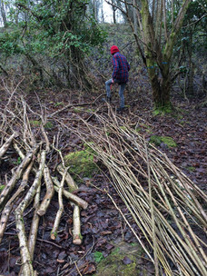 Coppice volunteering