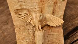Hoolie: Owl