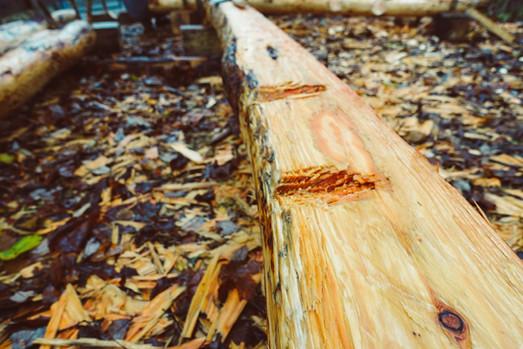 Hewn log