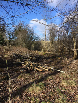 At the coppice