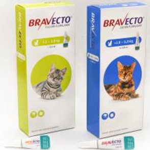 Bravecto Spot On Gatos