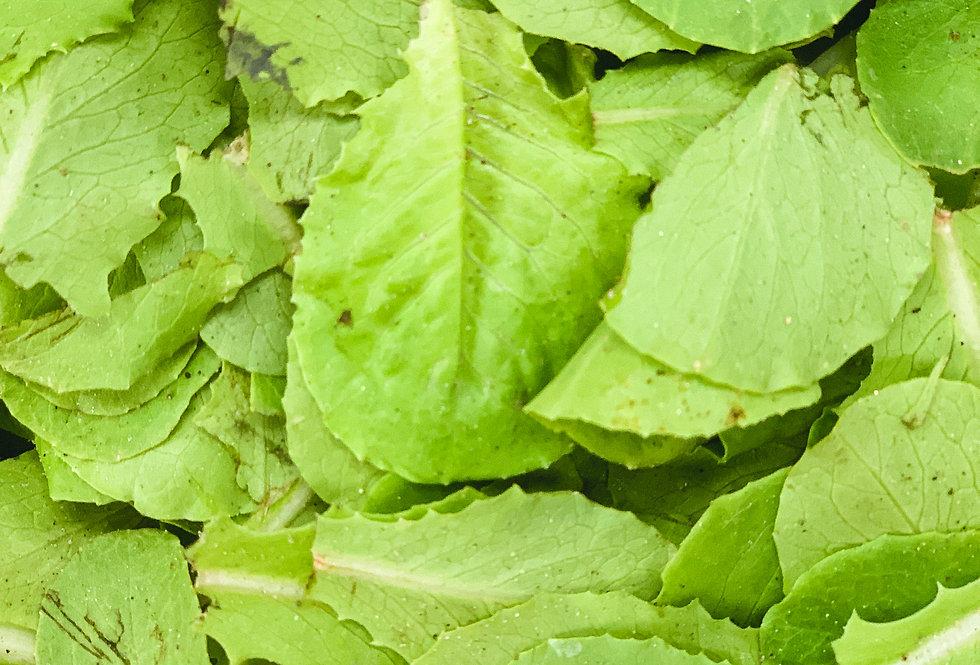 Temalpakh Romaine Lettuce