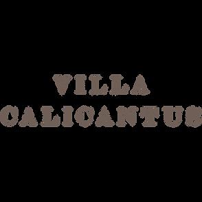 villa calicantus vino bardolino verona