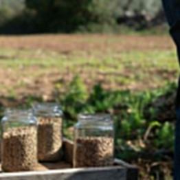 Cereali di qualità, il primo patto di filiera locale firmato nel giorno della Maddalena
