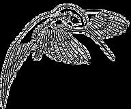 Kolibri_2008S_transparent_edited.png