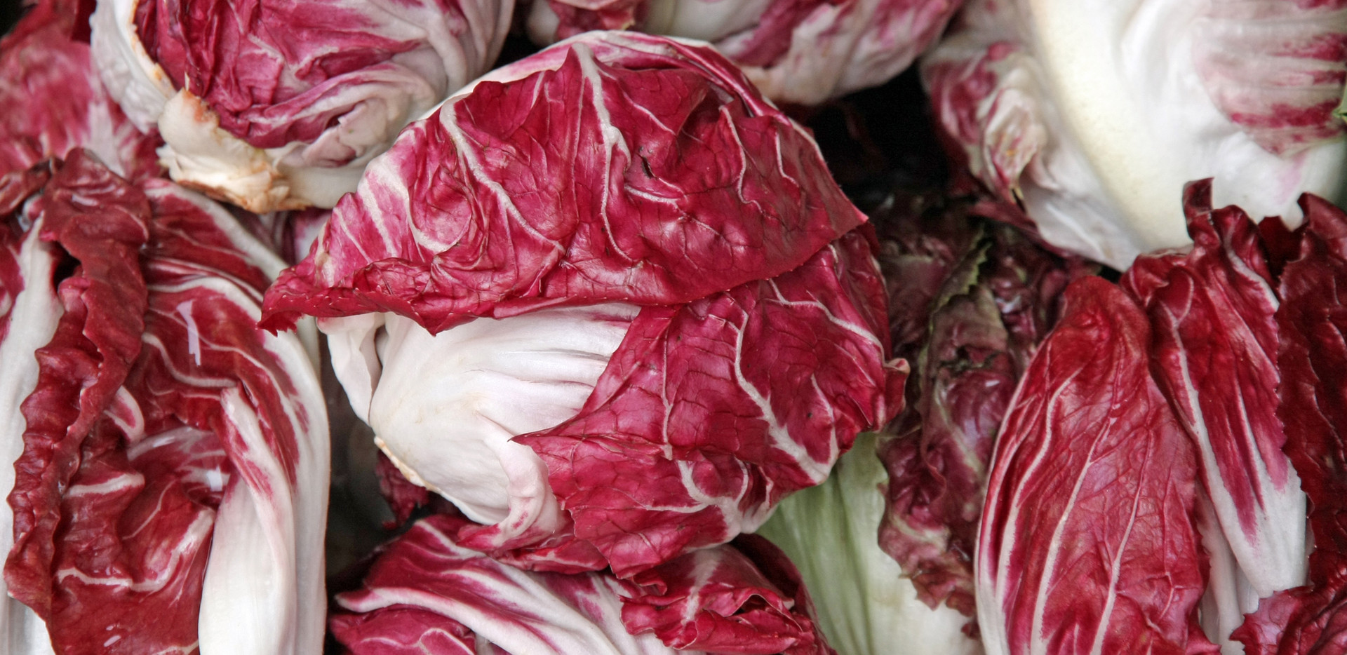 crunchy red radicchio heads for sale at
