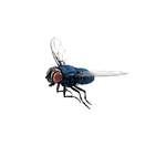 Fly right png.png