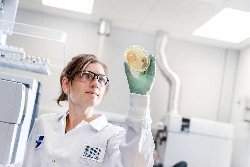 microbiology petri dish