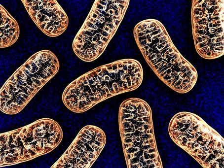 Mitochondrial transfer in WJ-MSCs