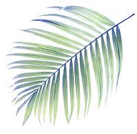 Palm Tree Leaf_edited_edited.jpg