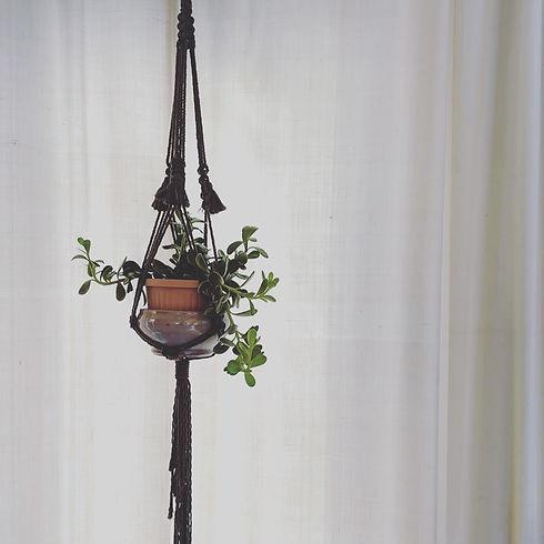 Olive Plant Hanger.JPG