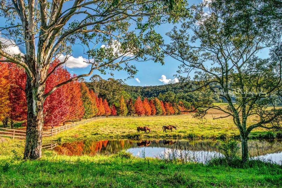 Yarramalong Autumn