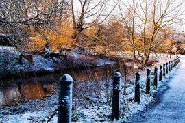 Snowy Sow_DxO.jpg