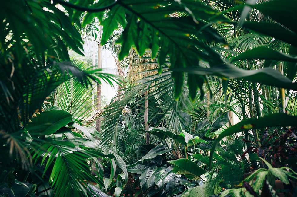 jungle background.jpg