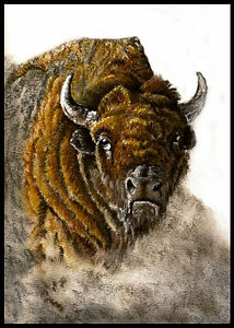Buffallo Pastel Painting