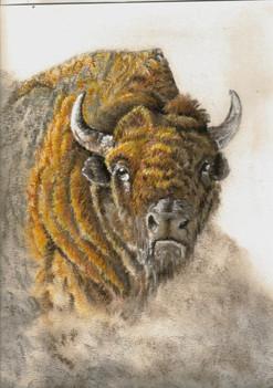Buffallo pastel painting