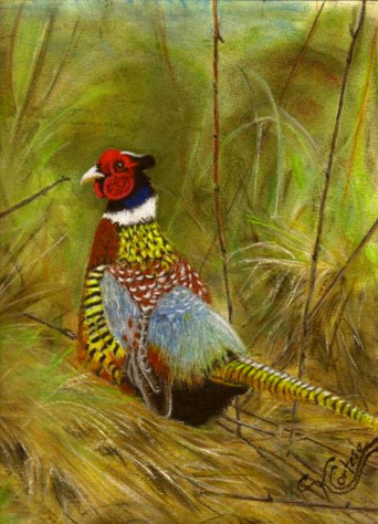 """Pheasent pastel painting 9"""" x 12"""""""