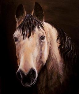 "Buckskin Quarter Horse ""Arrow"""
