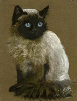 Himilanian cat pastel painting