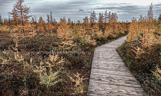 Mer Bleue Bog in Fall.jpg